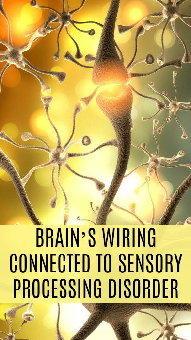 Study Finds Brain's Wiring Connected To Sensory Processing Disorder