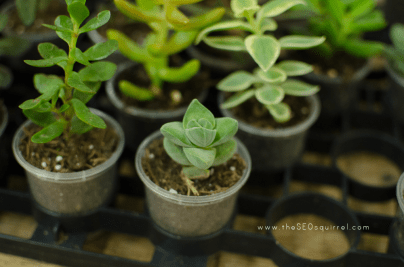 help your blog grow, blogging seo, succulents, succulent babies, terrarium supplies