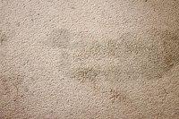 removing spots from carpet  Floor Matttroy