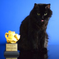 shorty winner golden kitty 2014