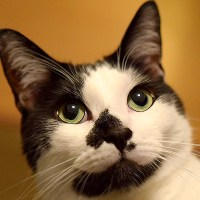toxoplasmosis from your cat litter
