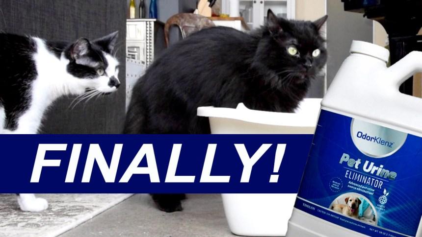 cat urine smell odorklenz litter box