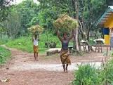 Sierra Leone farming1