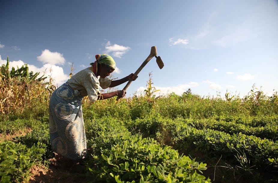 Women farming in Africa