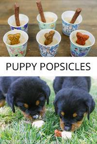 Puppy Popsicles | Frozen Dog Treats