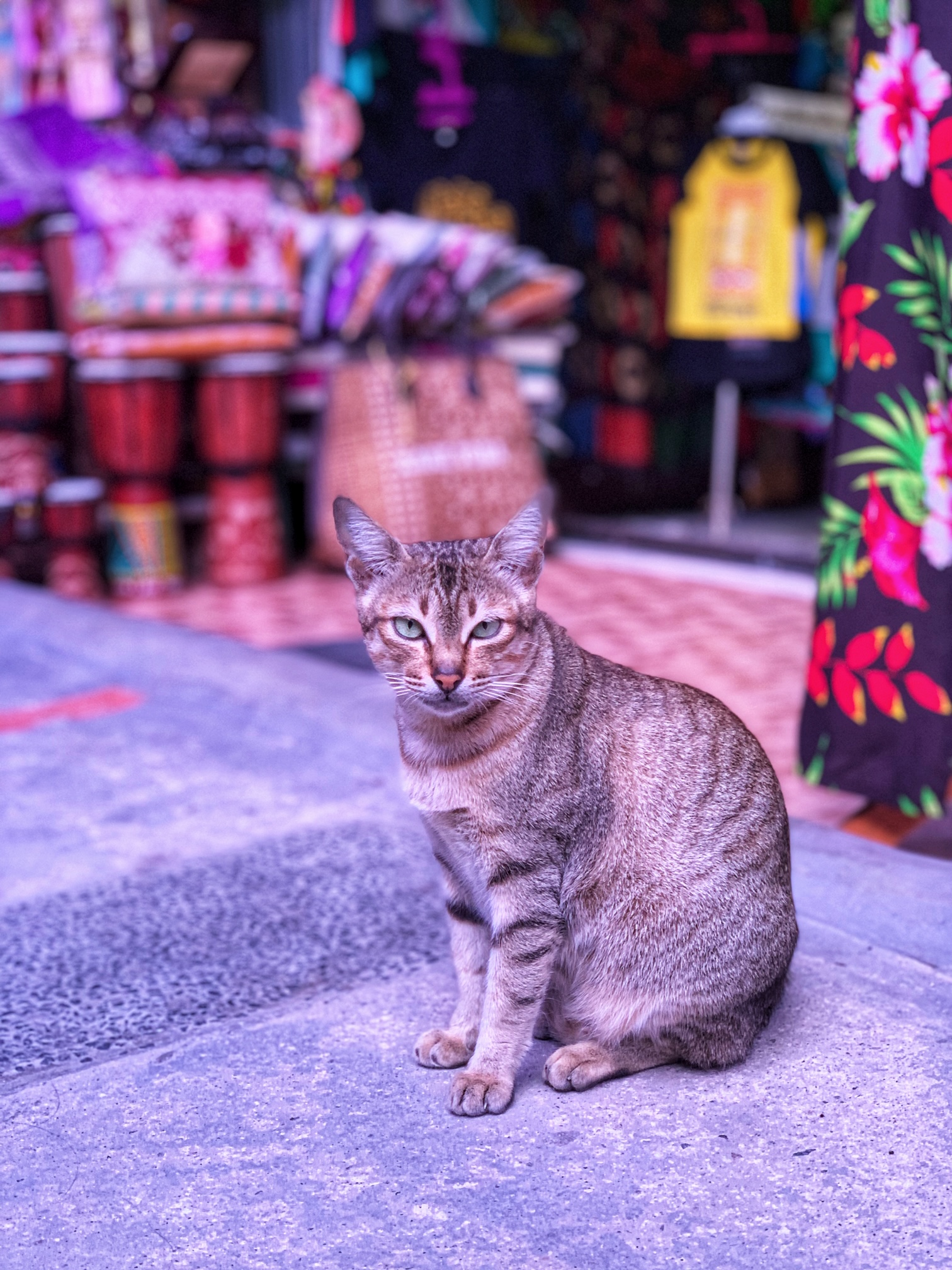 Pelabuhan Tomok Market cat Indonesia