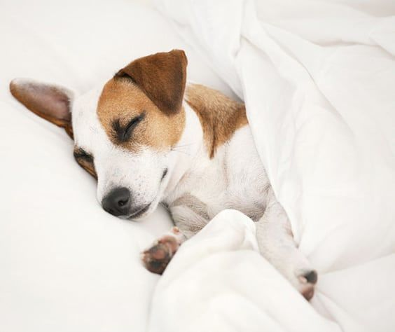 The Benefits Of Sleeping With Your Dog  The Sleep Judge