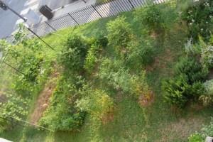 garden.7.11.09 020