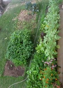 garden.7.11.09 021