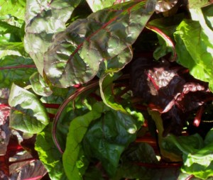 One of our favorite vegetables: ruby Swiss chard
