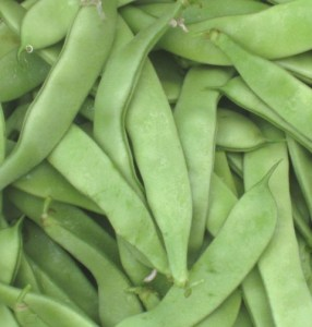 One of our favorite green beans