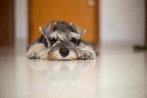 small dog