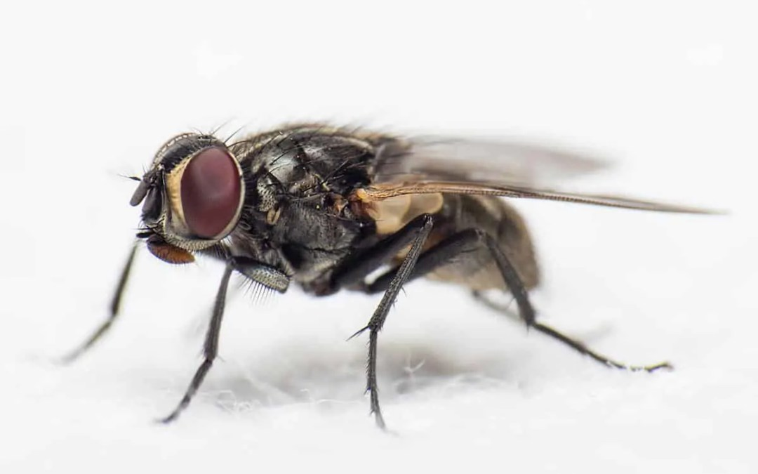 4 Types of Common Home Pests and How to Control Them
