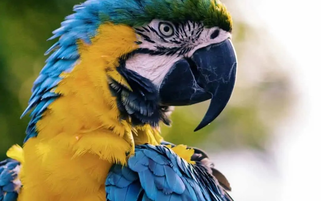 Facts to Know About Exotic Pets