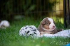 Nora&Oliver_Puppies-145-Rajah