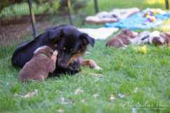 Nora&Oliver_Puppies-170-Rajah