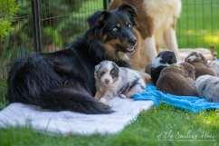 Nora&Oliver_Puppies-178Rio