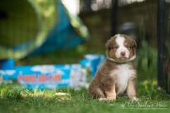 Nora&Oliver_Puppies-219-Rajah