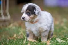 Nora&Oliver_Puppies-245Rio