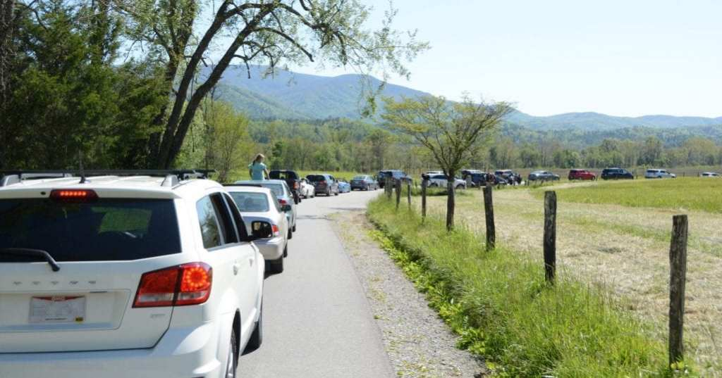Guests returned to the Great Smoky Mountains National Park in large numbers following the park's reopening last month. (photo by Daniel Munson/TheSmokies.com)