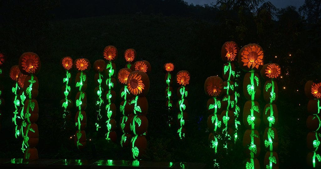 The sunflower field display at Dollywood's Harvest Festival (photo by Daniel Munson/TheSmokies.com)