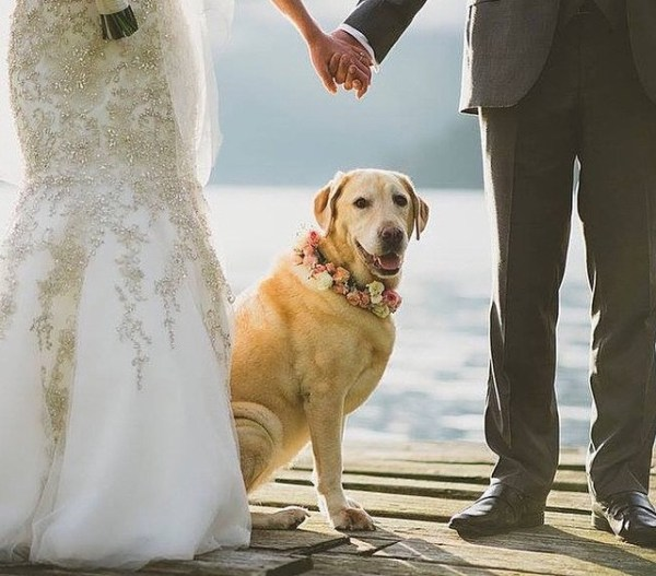 pet_friendly wedding_5