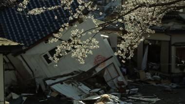 The Tsunami and the Cherry Blossom Still
