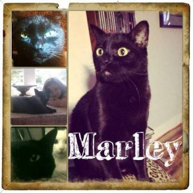 Aaron Foster+Marley