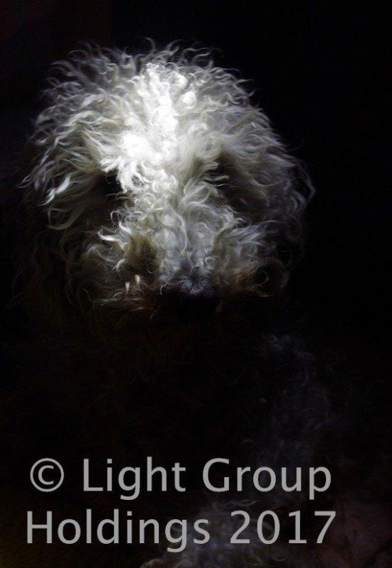 Bella The Dog Photography Super Star