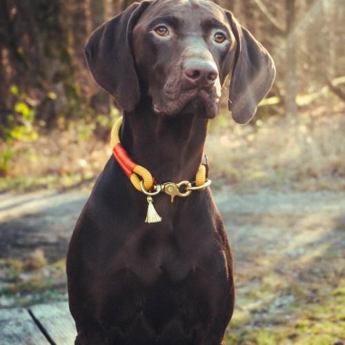 Pawsome Hundezubehör Hundeleinen Halsbänder aus Kletterseil handgefertigt individuell nachhaltig Wien