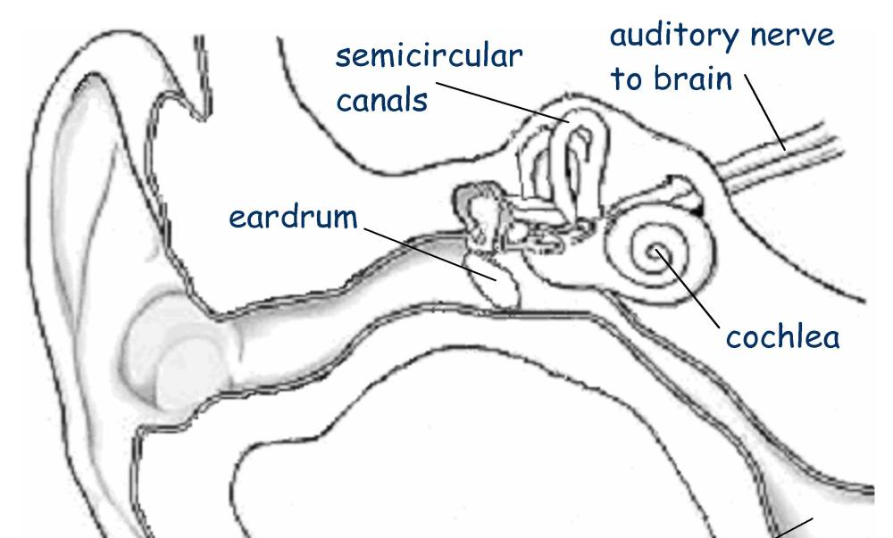 medium resolution of there are five generally accepted senses that we become aware of at an early age hearing vision touch smell and taste there are however other equally