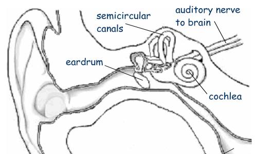 small resolution of there are five generally accepted senses that we become aware of at an early age hearing vision touch smell and taste there are however other equally