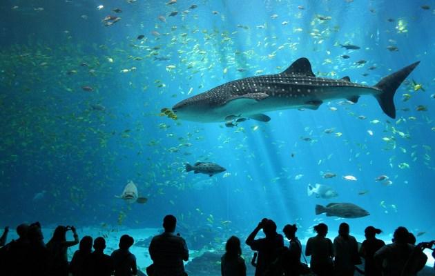A tunnel of fish inside the Georgia Aquarium.