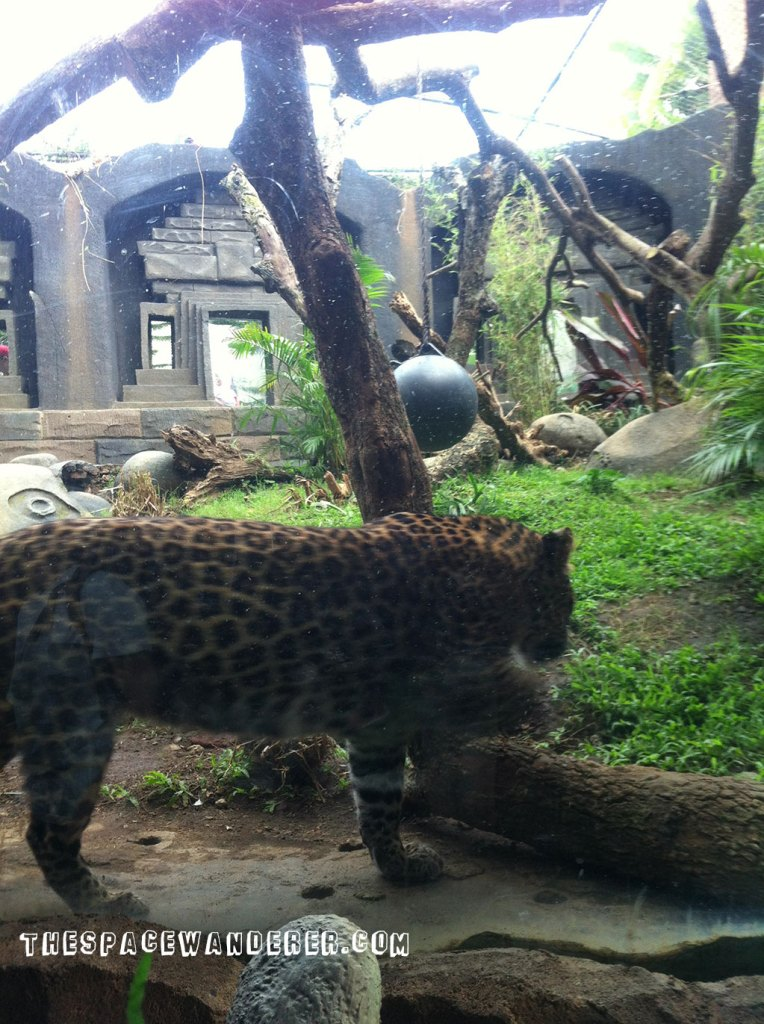 malang-012-batu-secret-zoo-restaurant-cheetah