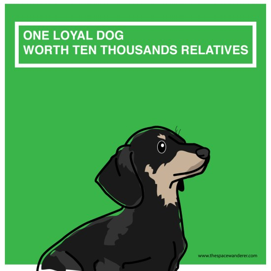 one loyal dog worths ten thousands realtives