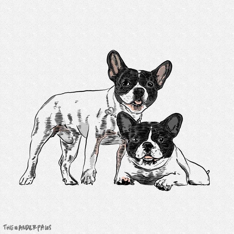 Pet Illustration Service