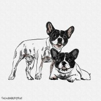 A Couple of French Bulldog Drawing
