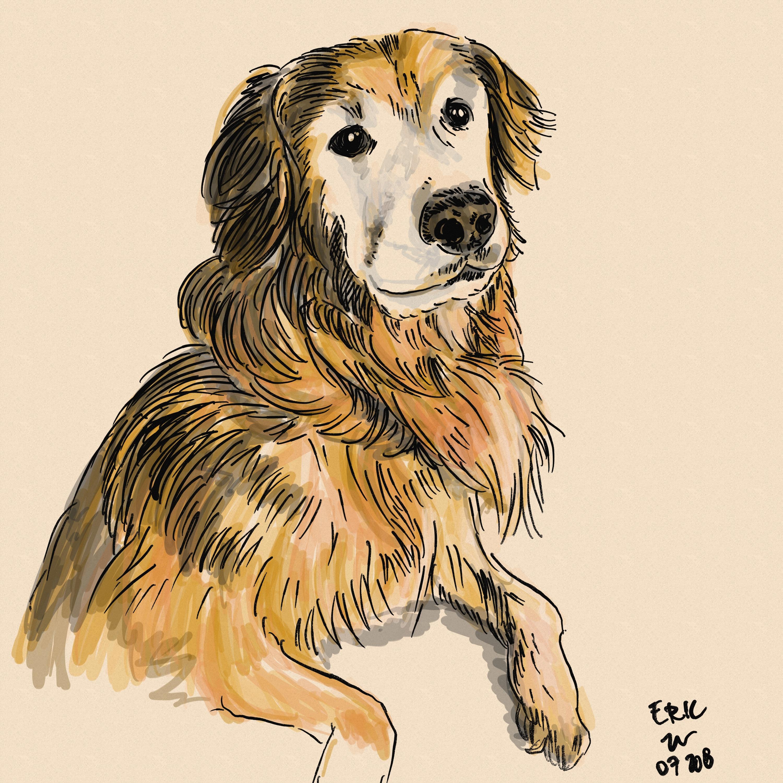 Gambar Gambar Sketsa Anjing Lucu