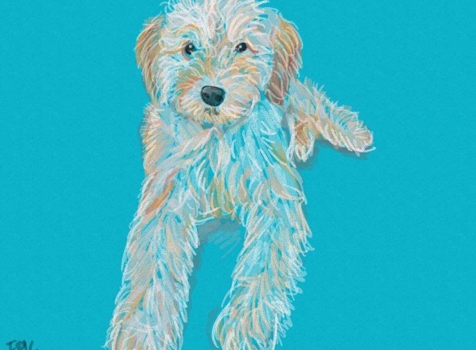 Gambar anjing lucu