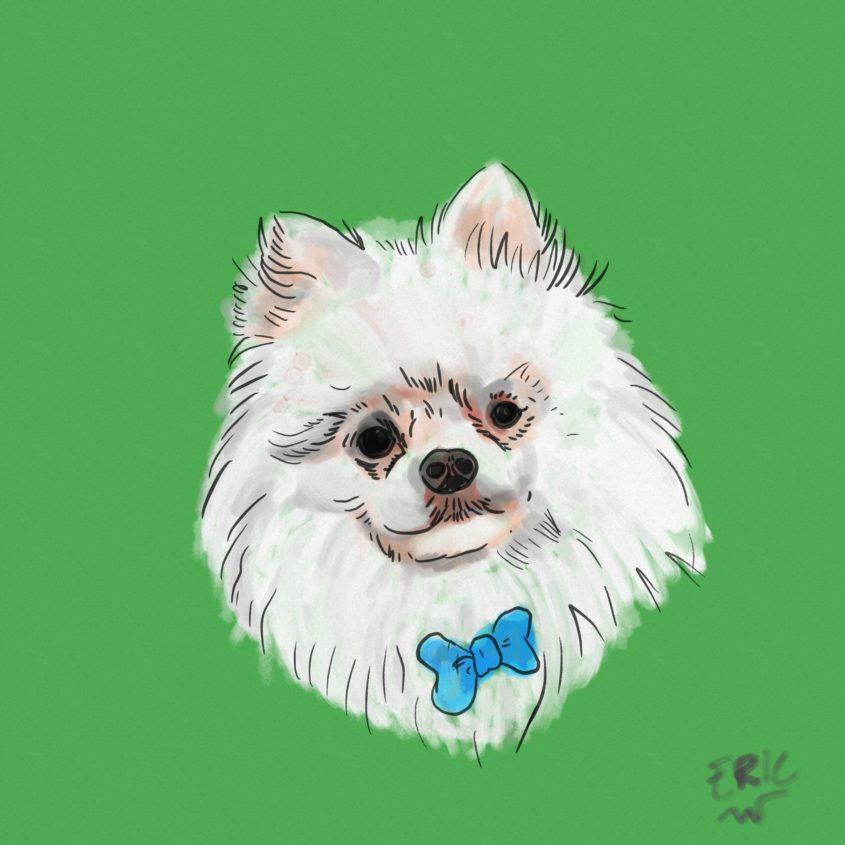 Pomeranian drawing