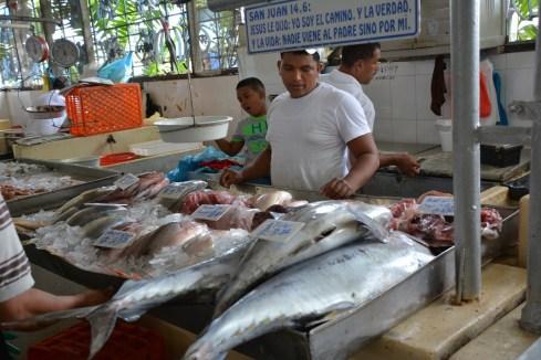 Tuna for sale