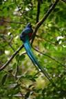 The most resplendent quetzal