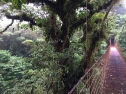 The suspended canopy bridge
