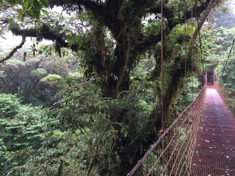 The suspended canopy bridge
