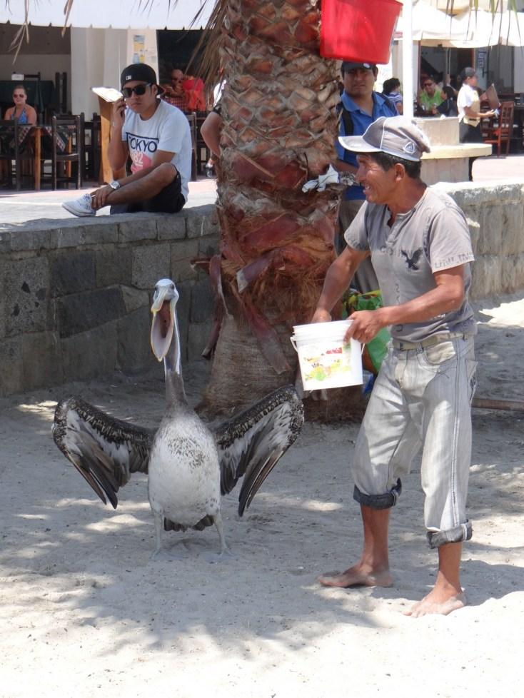 Jose the pelican