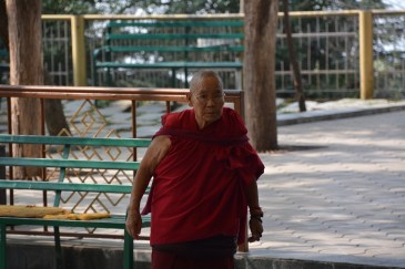 Elderly monk after morning session