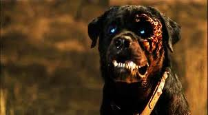 Rottweiler Fall Wallpaper Rottweiler Review 2004