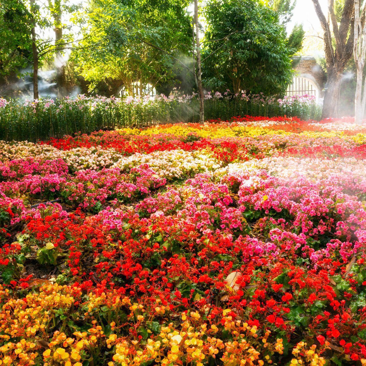 10 Best Sun Loving Flowers Growing In Michigan