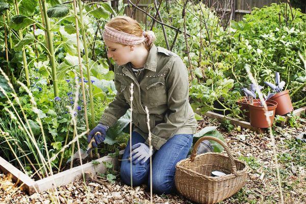 start organic vegetable
