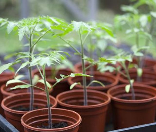 What You Should Know About Starting Seeds Indoors
